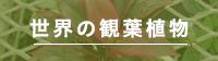 世界の観葉植物